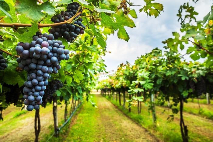 regiones productoras de vinos