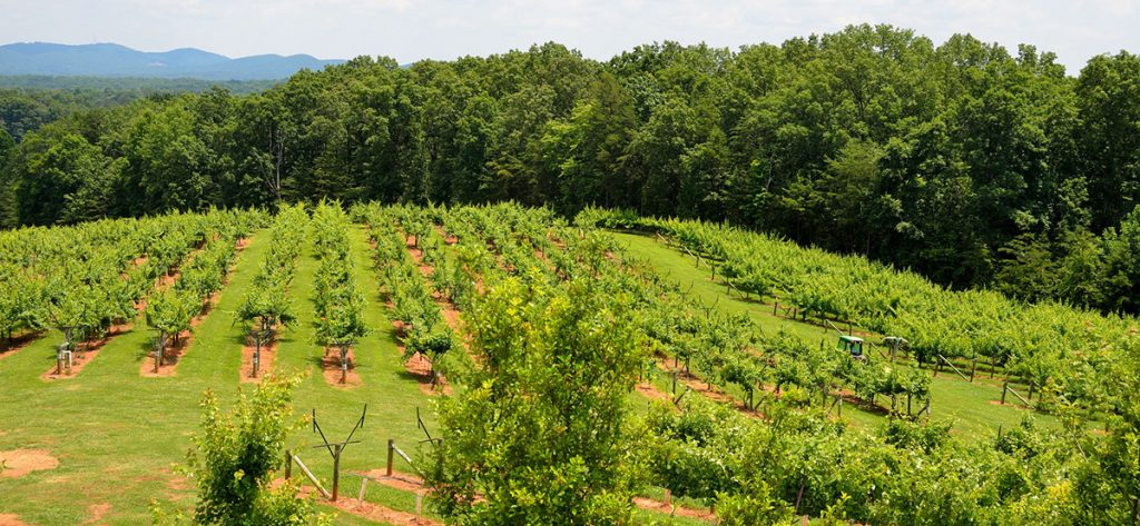 regiones vitivinícolas