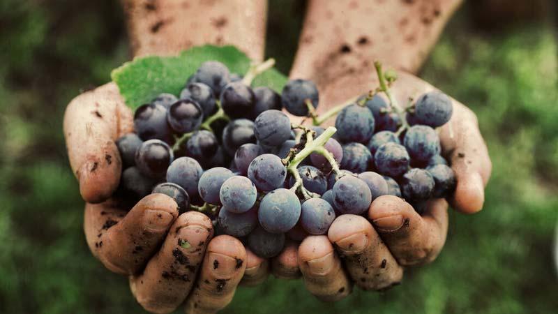 vino biodinámico