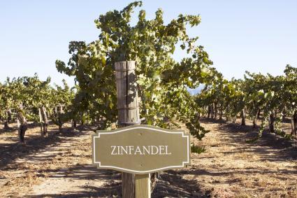 Signo de Zinfandel en viñedo