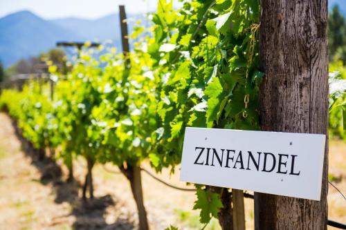 Viñedo que cultiva uvas Zinfandel