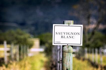 Signo de Sauvignon Blanc en viñedo en Franschhoek, Sudáfrica