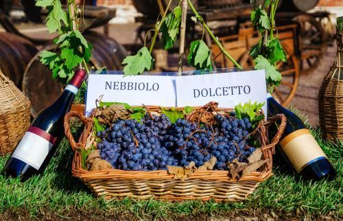 Botellas y uvas de vino nebbiolo y dolcetto