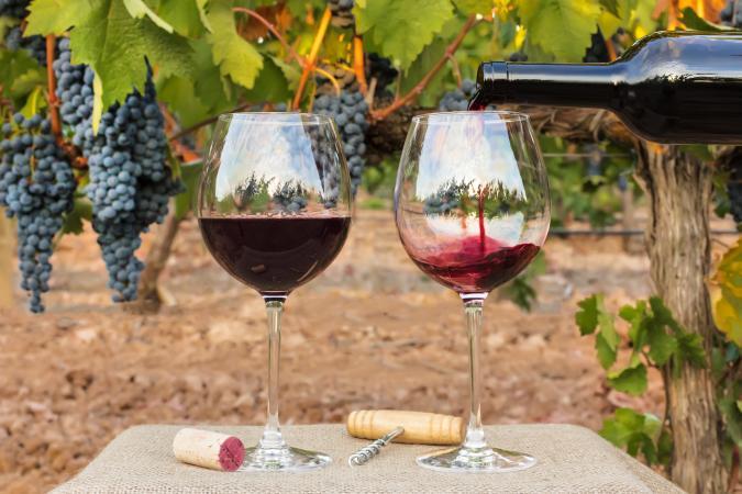 Verter Cabernet Sauvignon en copas con uvas de viñedo en segundo plano.