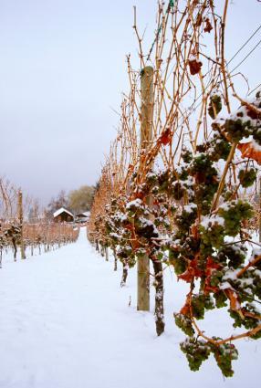 El vino de hielo es un vino dulce de postre.