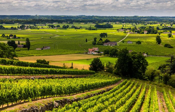 Bodegas de vino de Burdeos