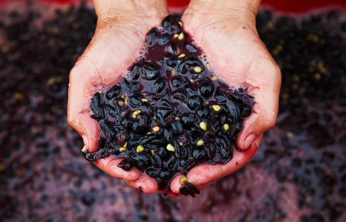 Hombre con uvas rojas trituradas frescas