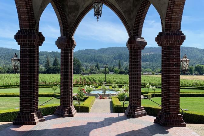Vista del viñedo desde la bodega Ledson