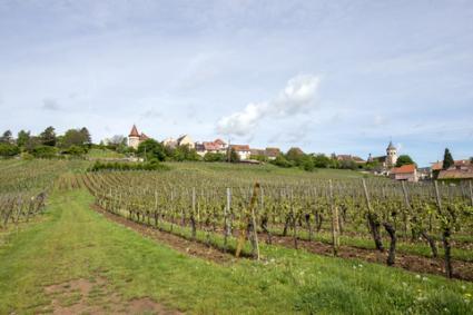 Viñedos en Alsacia;  © Gpahas |  Dreamstime.com