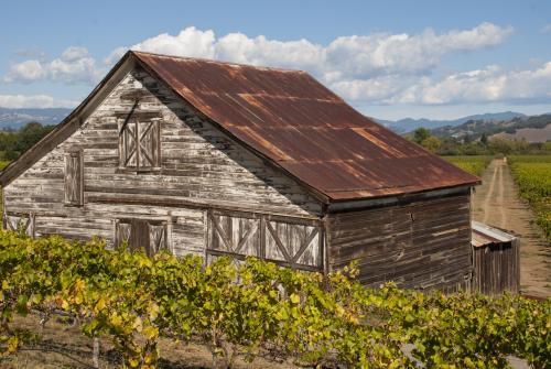 Granero y viñedos en el valle del río Ruso