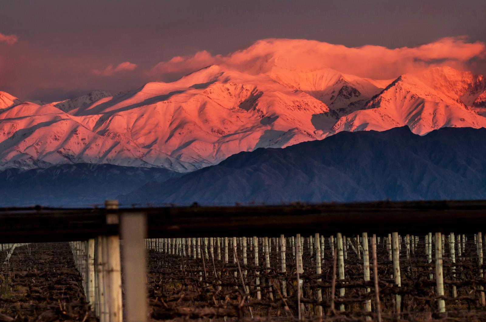 Montañas cubiertas de nieve contra el cielo durante la puesta de sol y viñedo