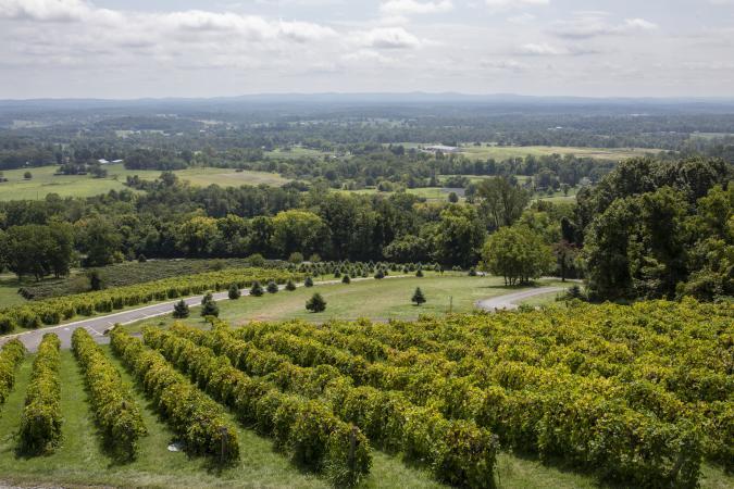 Vista desde el viñedo Bluemont en Virginia