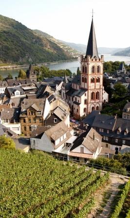 Viñedo con vistas al Rin en Alemania