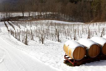 Paisaje nevado con enredaderas y barriles