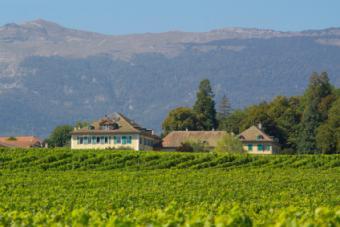 Un viñedo en la región francesa del Ródano