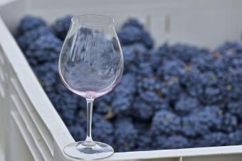 Vendimia y vidrio Pinot Noir